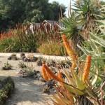 APA LA Arboretum succulent garden