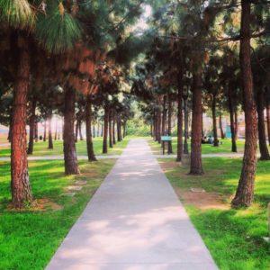 Barnsdall-Park-Walking-Path