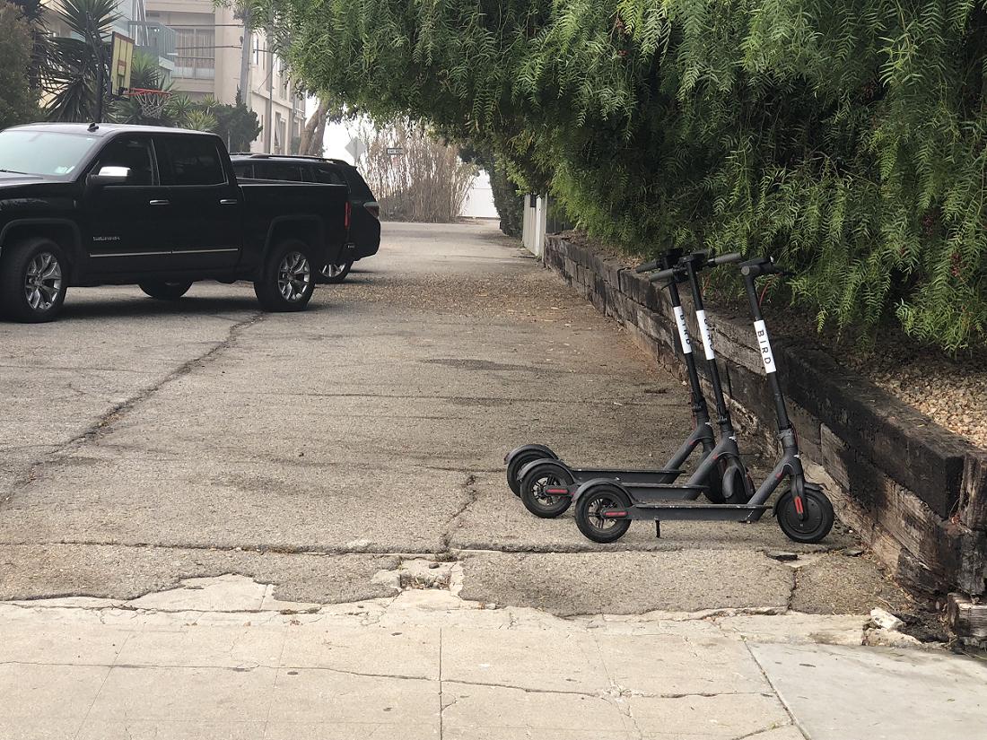 Sidewalk Wars_bird